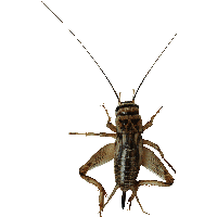 Insect Bug Png Image PNG Image