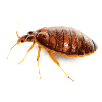Bug Png PNG Image