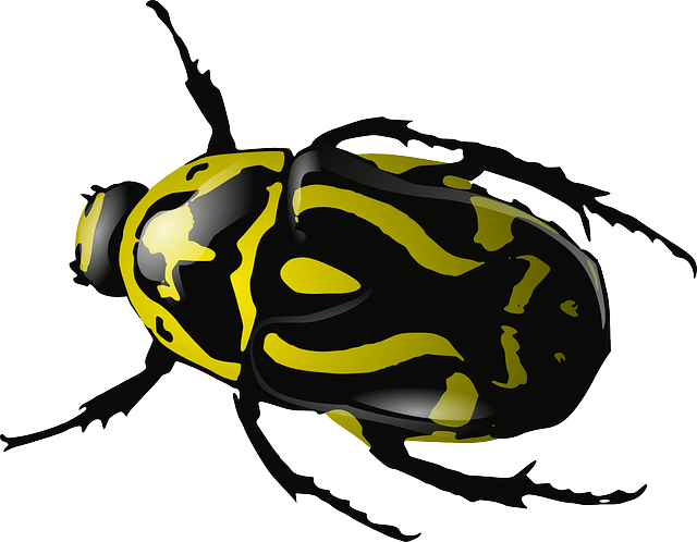 Bugs Clipart PNG Image
