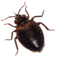 Bug Png 3 PNG Image