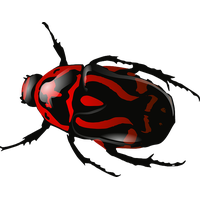 Bug Png 5 PNG Image
