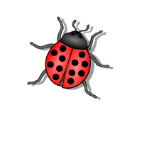 Bug Png 6 PNG Image