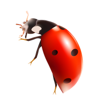 Bug Png 7 PNG Image