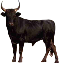 Bull Free Png Image PNG Image