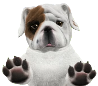 Bulldog Picture PNG Image