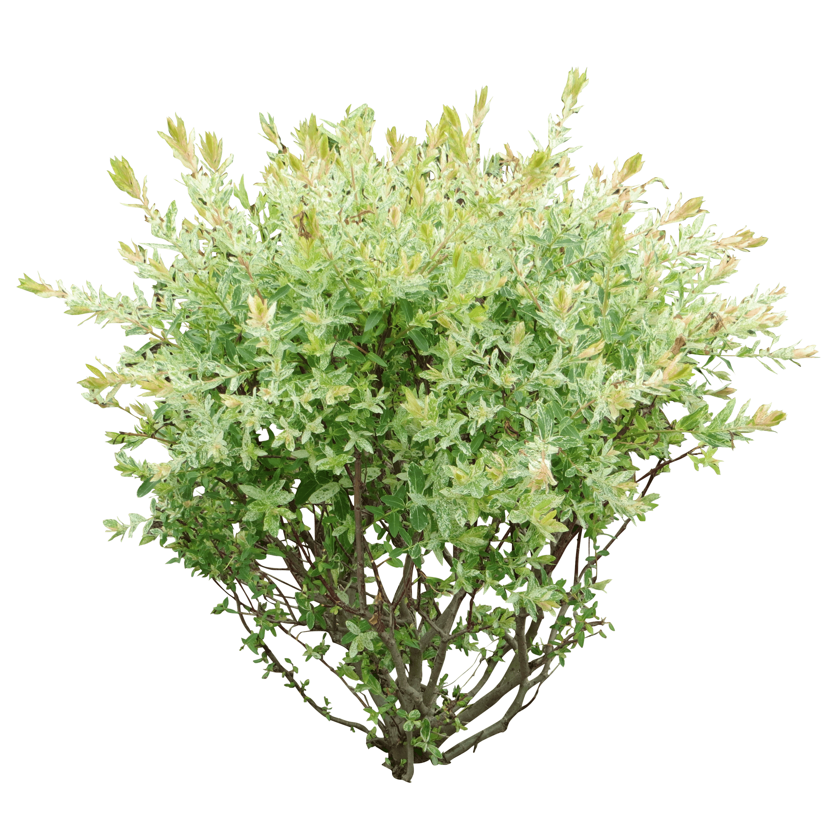 Download Bush Png Image Hq Png Image Freepngimg All bushes png images are displayed below available in 100% png transparent white background for free download. download bush png image hq png image