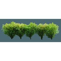 Green And White Leaf Bush
