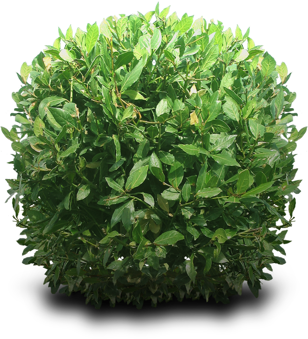 Bushes Free Download PNG Image