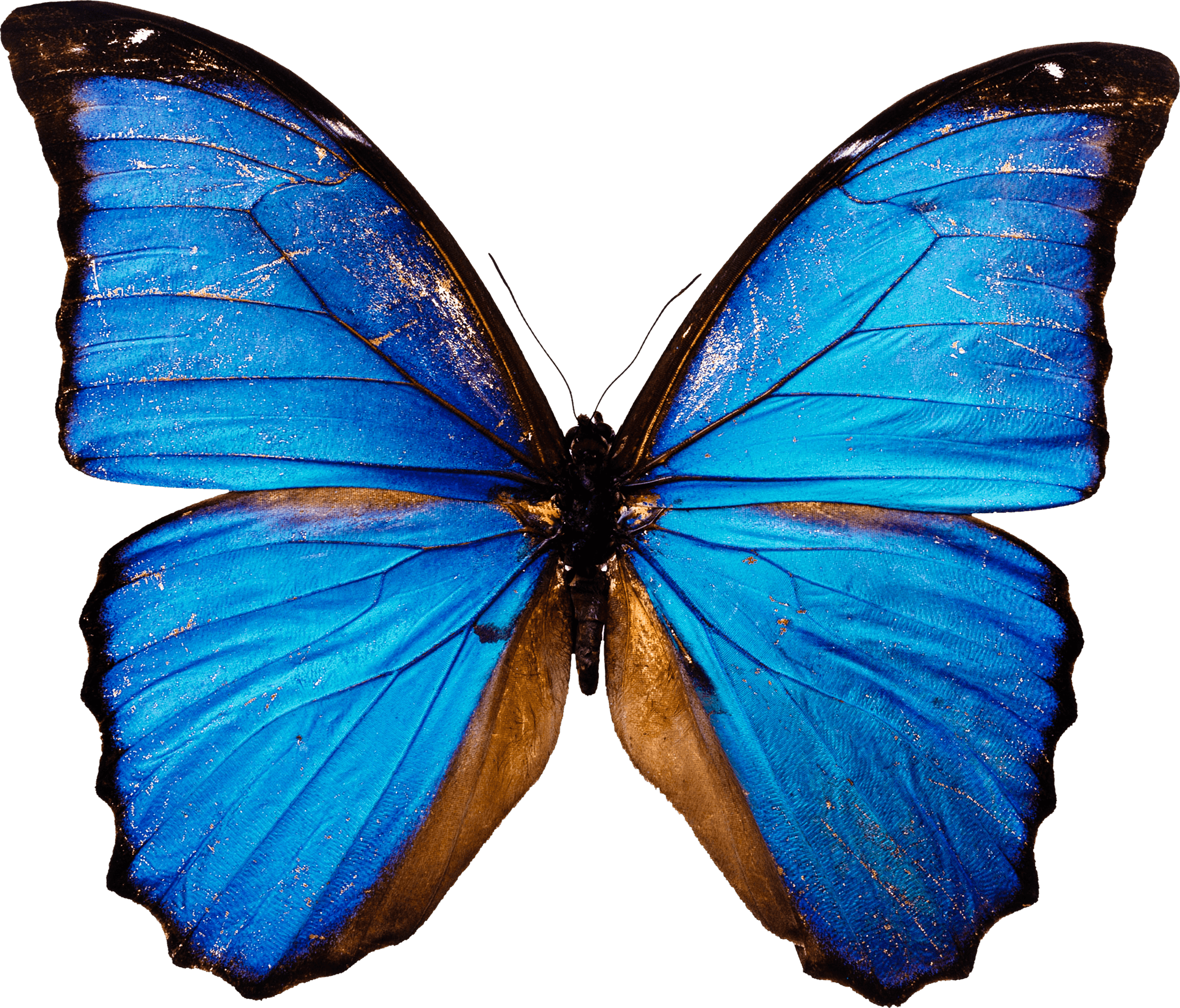 Blue Butterfly Png Image PNG Image