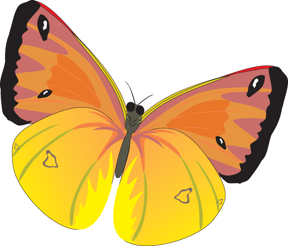 Butterfly Png Image PNG Image