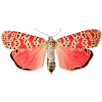 Pink Butterfly Png Image Butterflies PNG Image