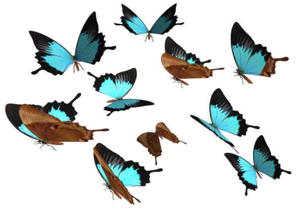 Butterfly Png 8 PNG Image