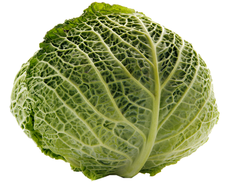 Cabbage Transparent PNG Image