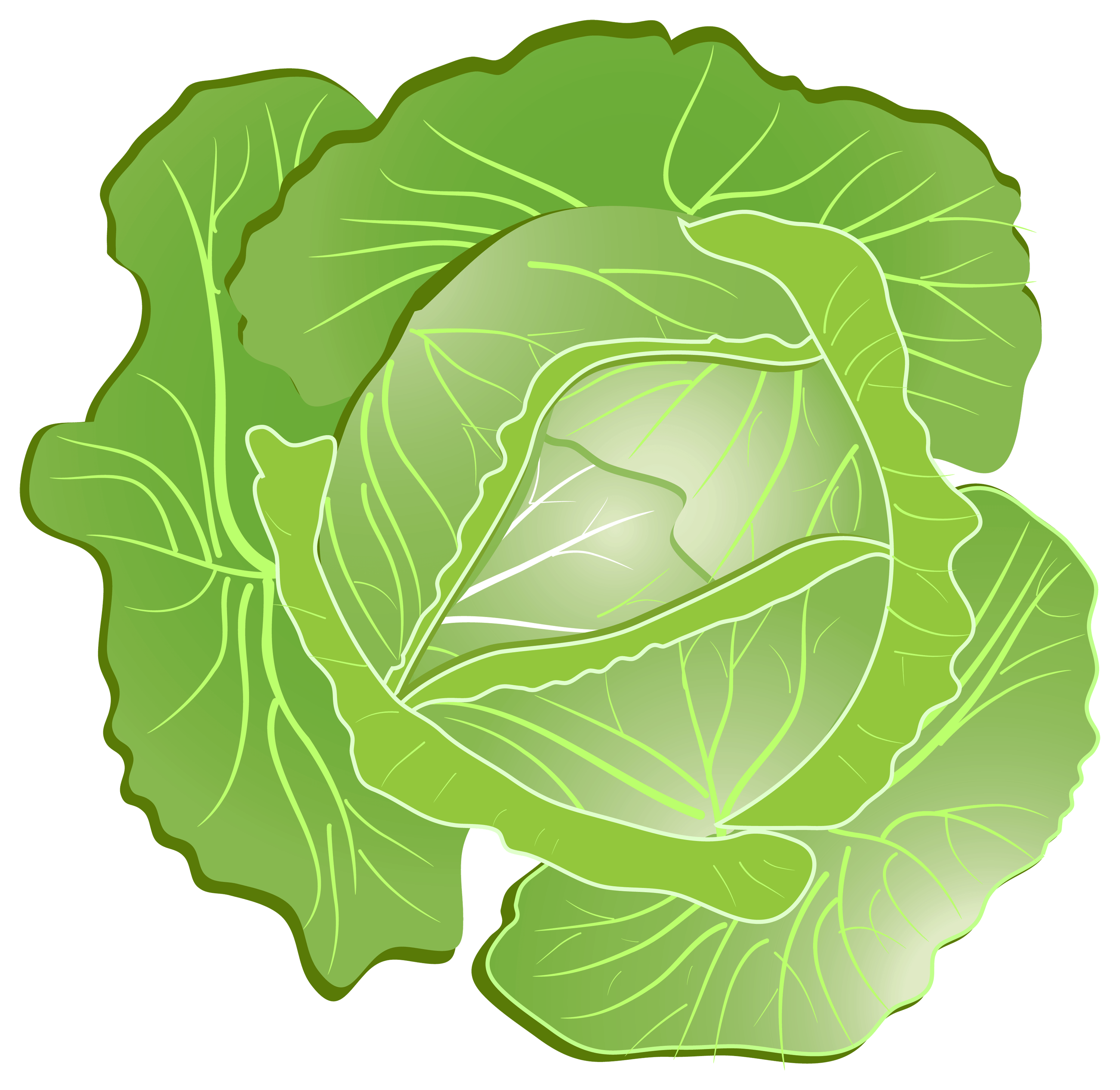 Cabbage Png Image PNG Image