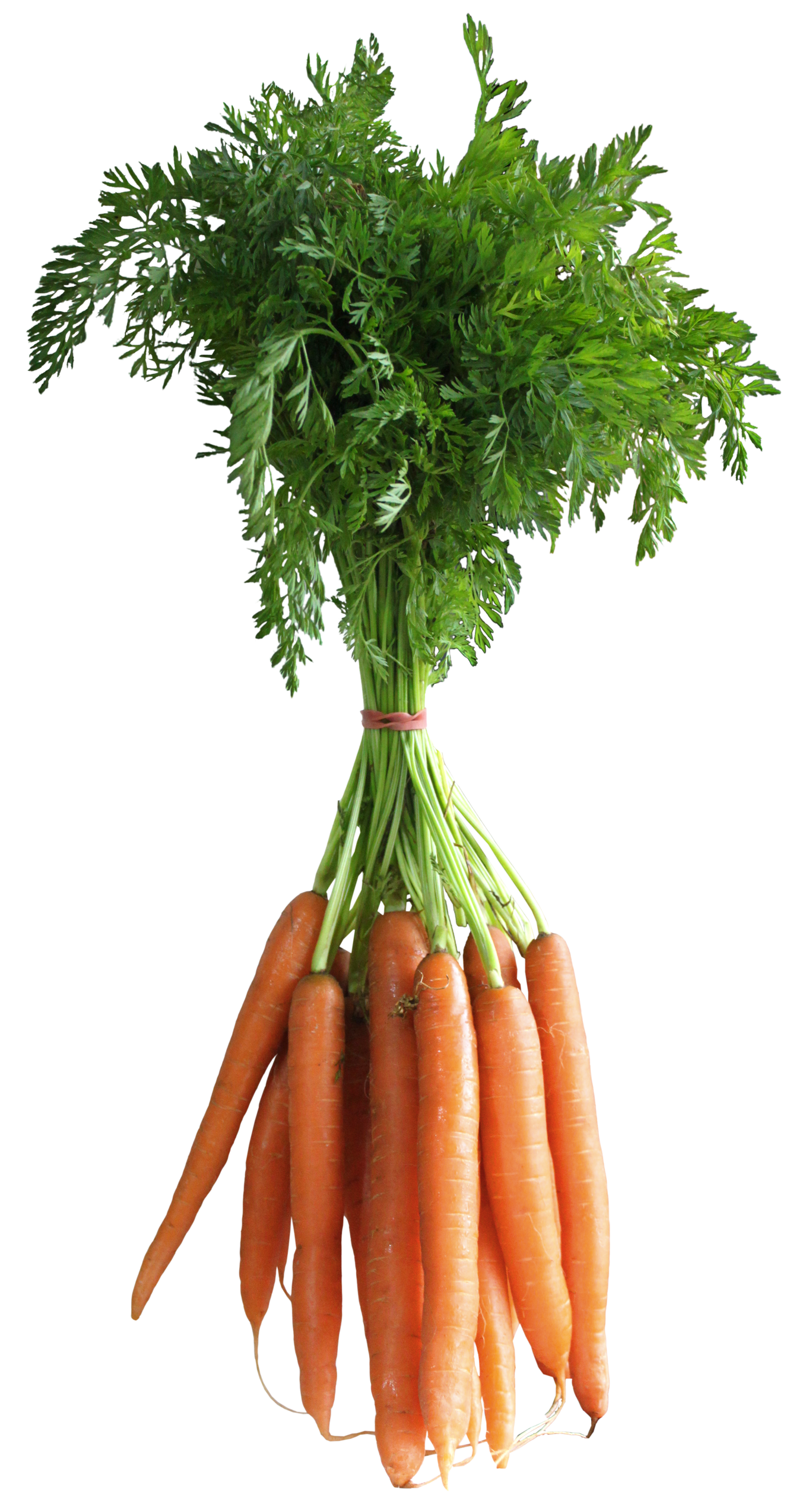 Carrot Png Picture PNG Image