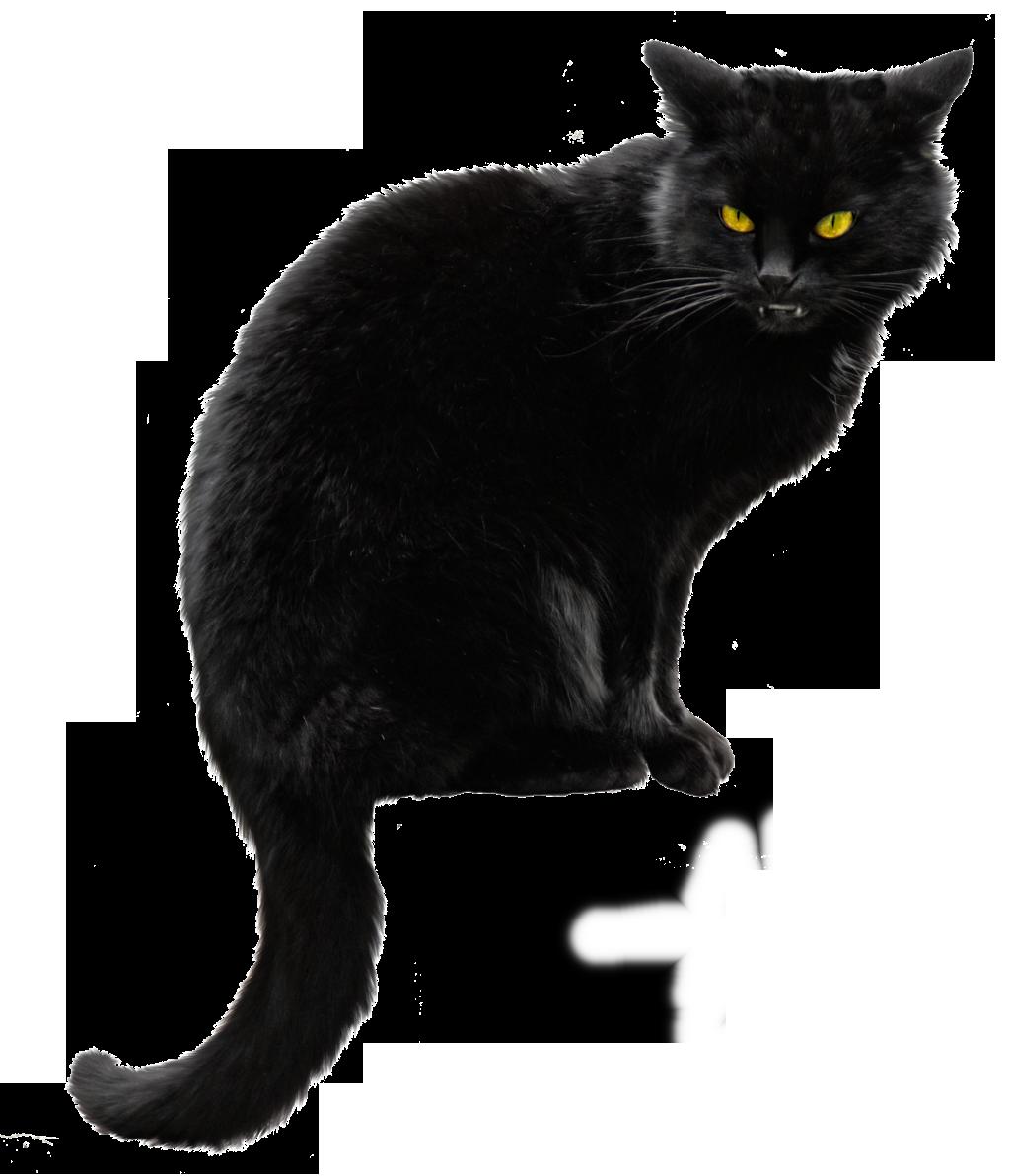 Download Black Cat File HQ PNG Image | FreePNGImg