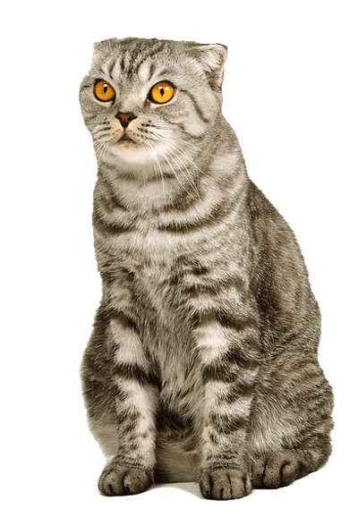Kitten Png Image Download Picture  PNG Image