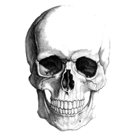 Skeleton Head Image