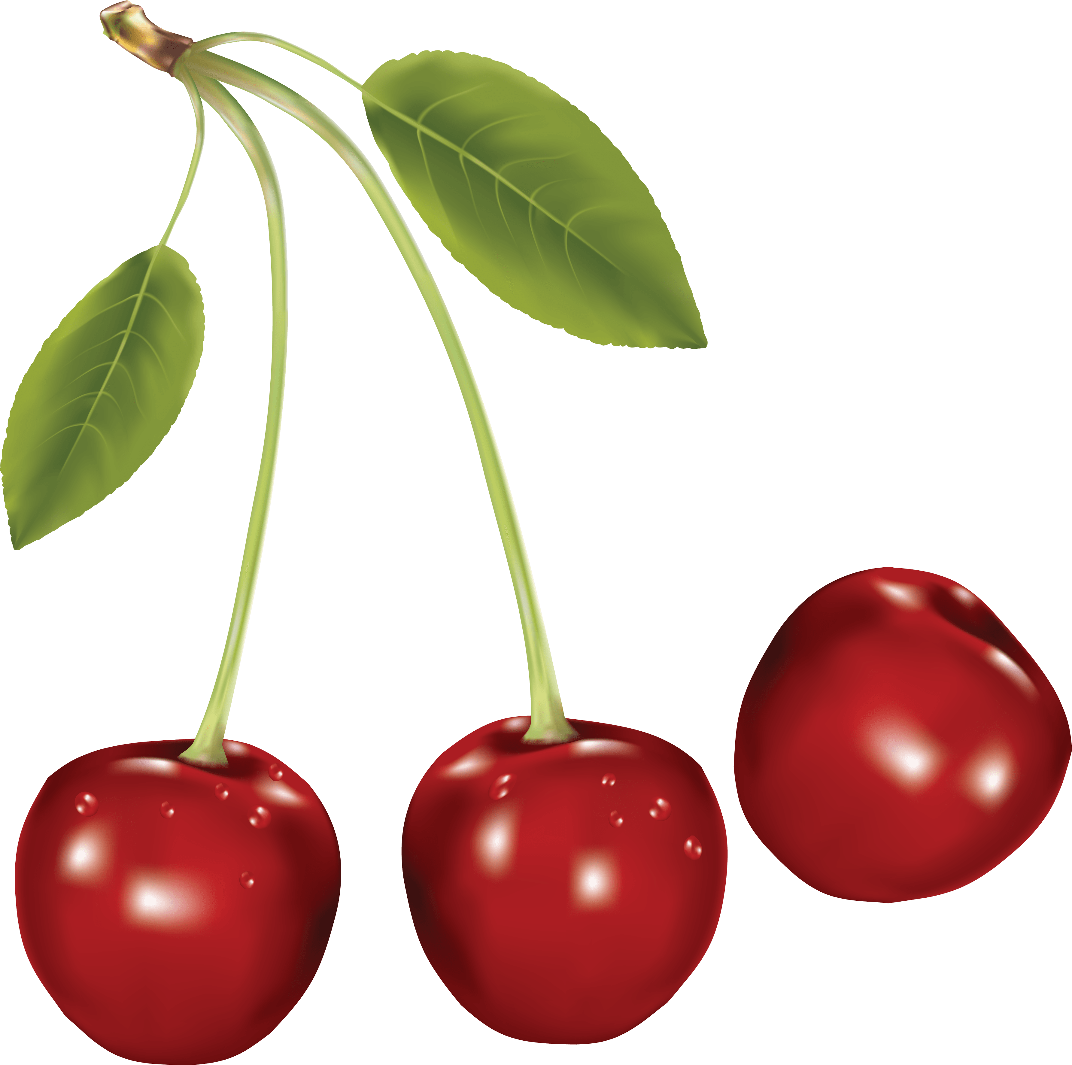 Cherries Png Image PNG Image
