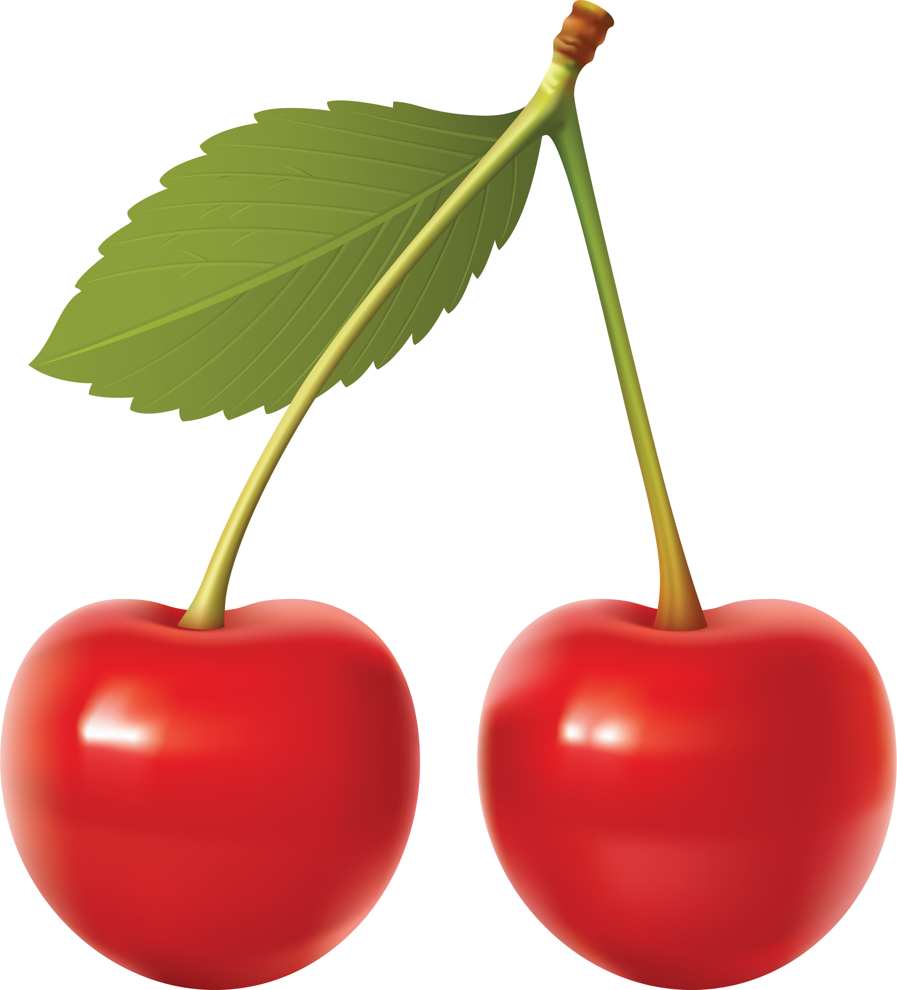 Cherry Vector File PNG Image