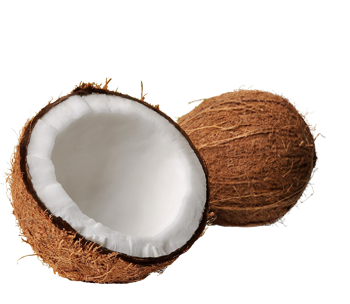 Coconut Png Clipart PNG Image