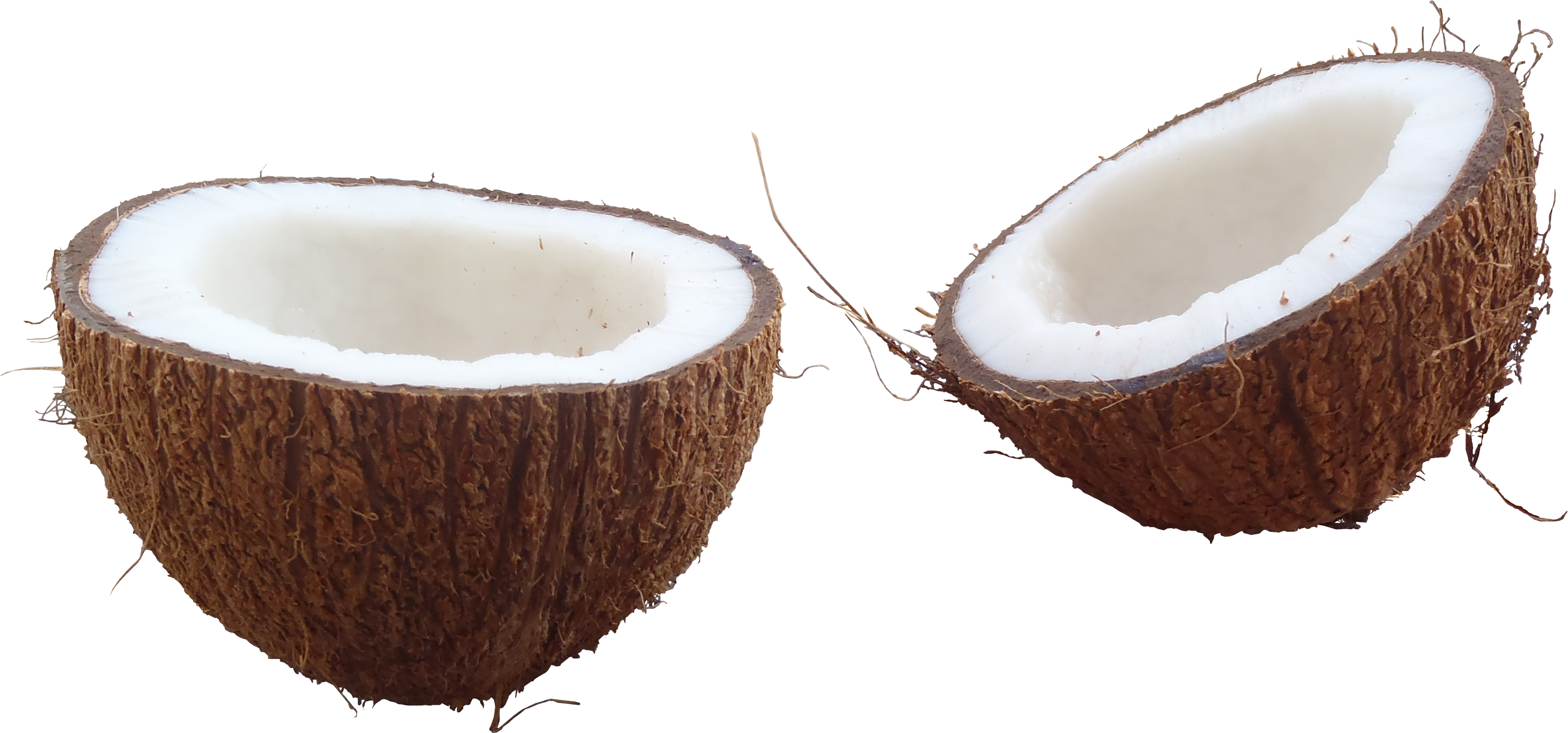 Coconut Image PNG Image