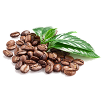 Download Coffee Beans Free Png Photo Images And Clipart