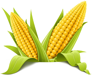Corn Png Picture PNG Image