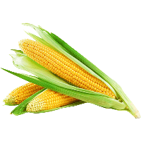 download corn free png photo images and clipart freepngimg honey clipart with transparent background honey clipart free glitter writing