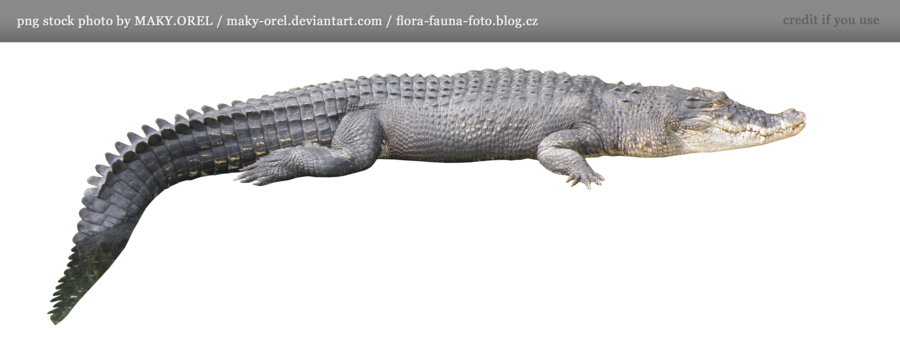 Crocodile Png Hd PNG Image