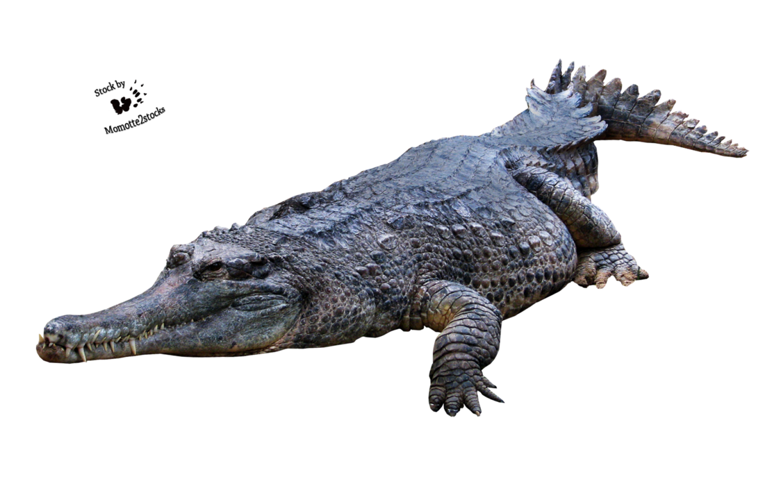 Crocodile Png Picture PNG Image
