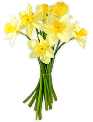 Daffodils Png PNG Image