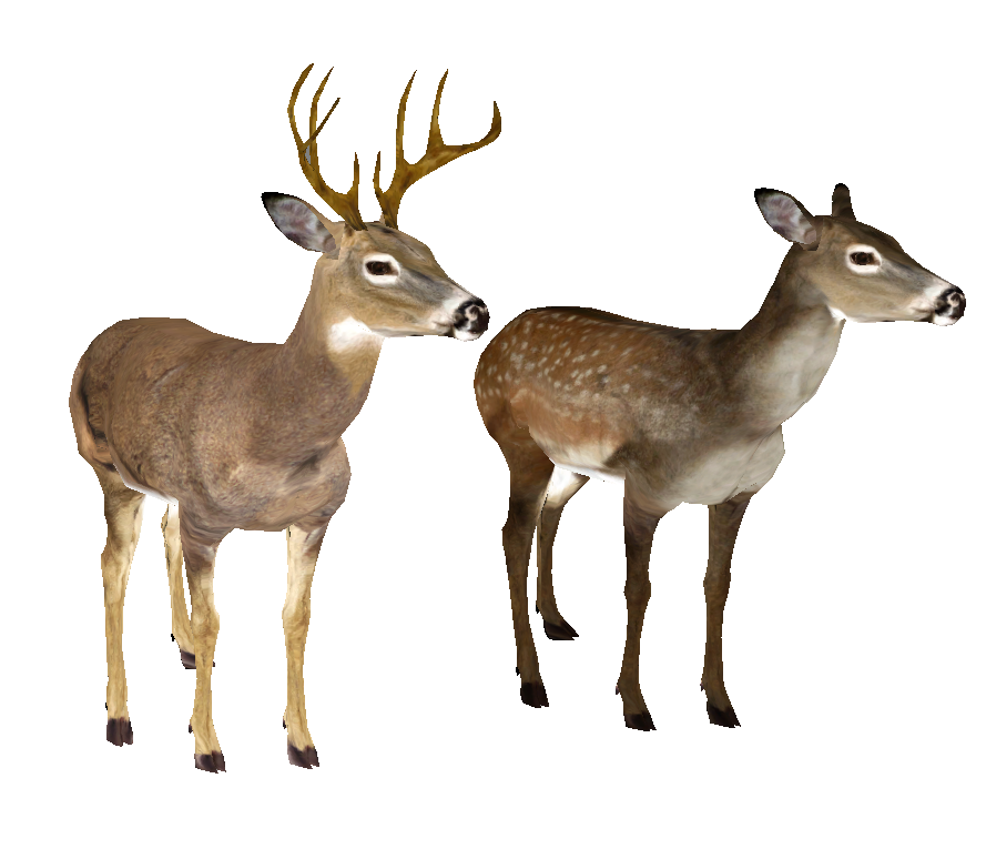 Whitetail Deer Head PNG Image
