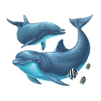 Dolphin Png File PNG Image
