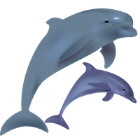 Dolphin Free Png Image PNG Image