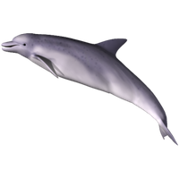 Dolphin Png Clipart PNG Image