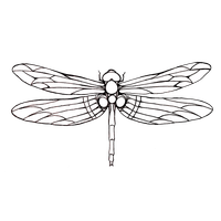 Dragonfly Tattoos Png PNG Image