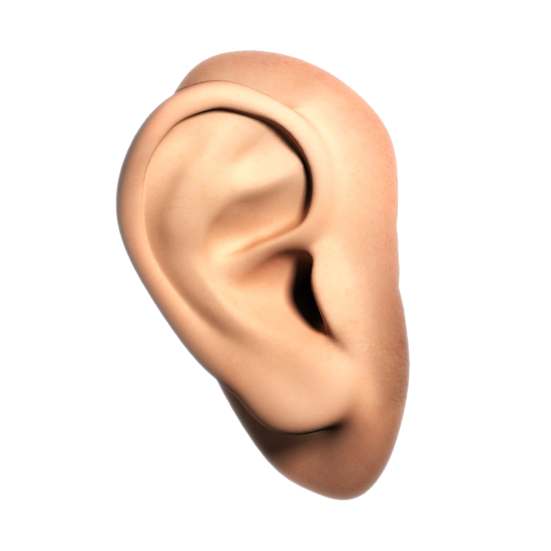 Ear Transparent PNG Image