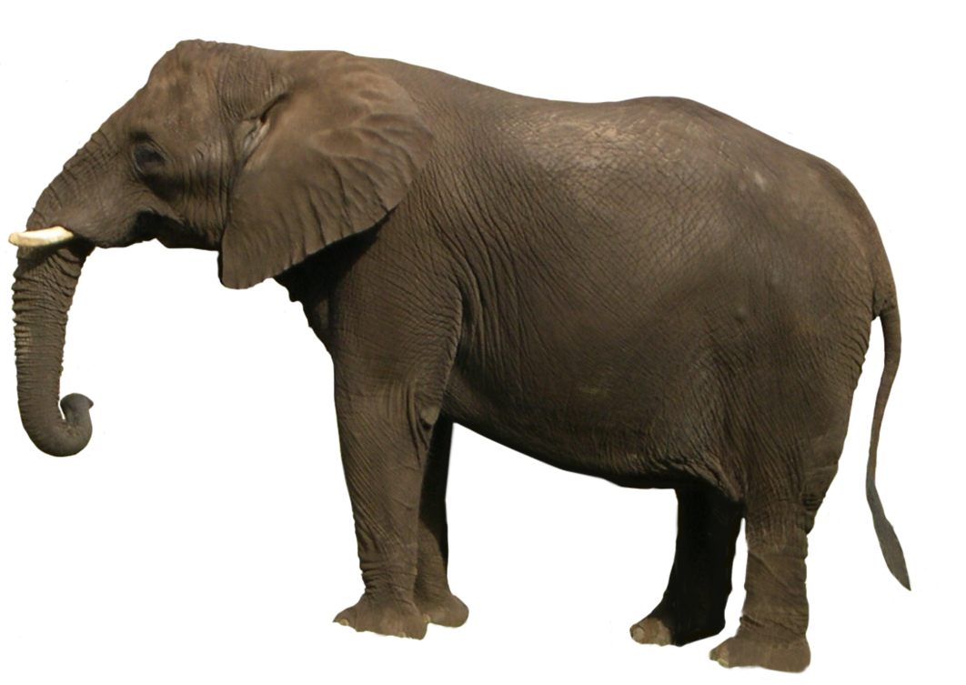 Elephant Png Image PNG Image