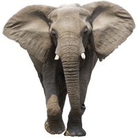 Elephant Free Download Png<B>素材格式</B>: PNG<B>素材尺寸</B>: 600x600<B>檔案大小</B>: 353.7KB<B>推薦人數</B>: 2,990