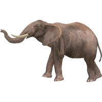 Download Elephant Free Png Photo Images And Clipart Freepngimg All images and logos are crafted with great workmanship. download elephant free png photo images
