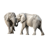 Download Elephant Free Png Photo Images And Clipart Freepngimg Find & download free graphic resources for elephant. download elephant free png photo images