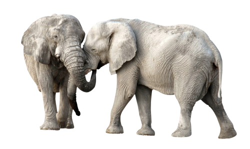Elephant Clipart PNG Image