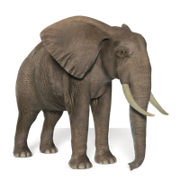 Download Elephant Free Png Photo Images And Clipart Freepngimg Search more hd transparent elephant image on kindpng. download elephant free png photo images