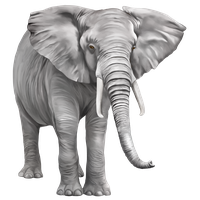 Elephant Free Download PNG Image