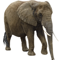 Elephant Png PNG Image
