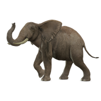 Elephant Picture PNG Image