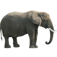 Elephant Png Clipart PNG Image