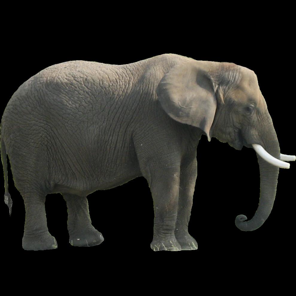 Download Elephant Png Clipart Hq Png Image Freepngimg Download transparent elephant png for free on pngkey.com. elephant png clipart hq png image