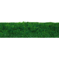 Field Transparent PNG Image